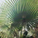 Jardin Bahia